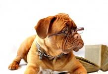 Studying Dog