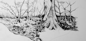 Trees in Yard Sketch