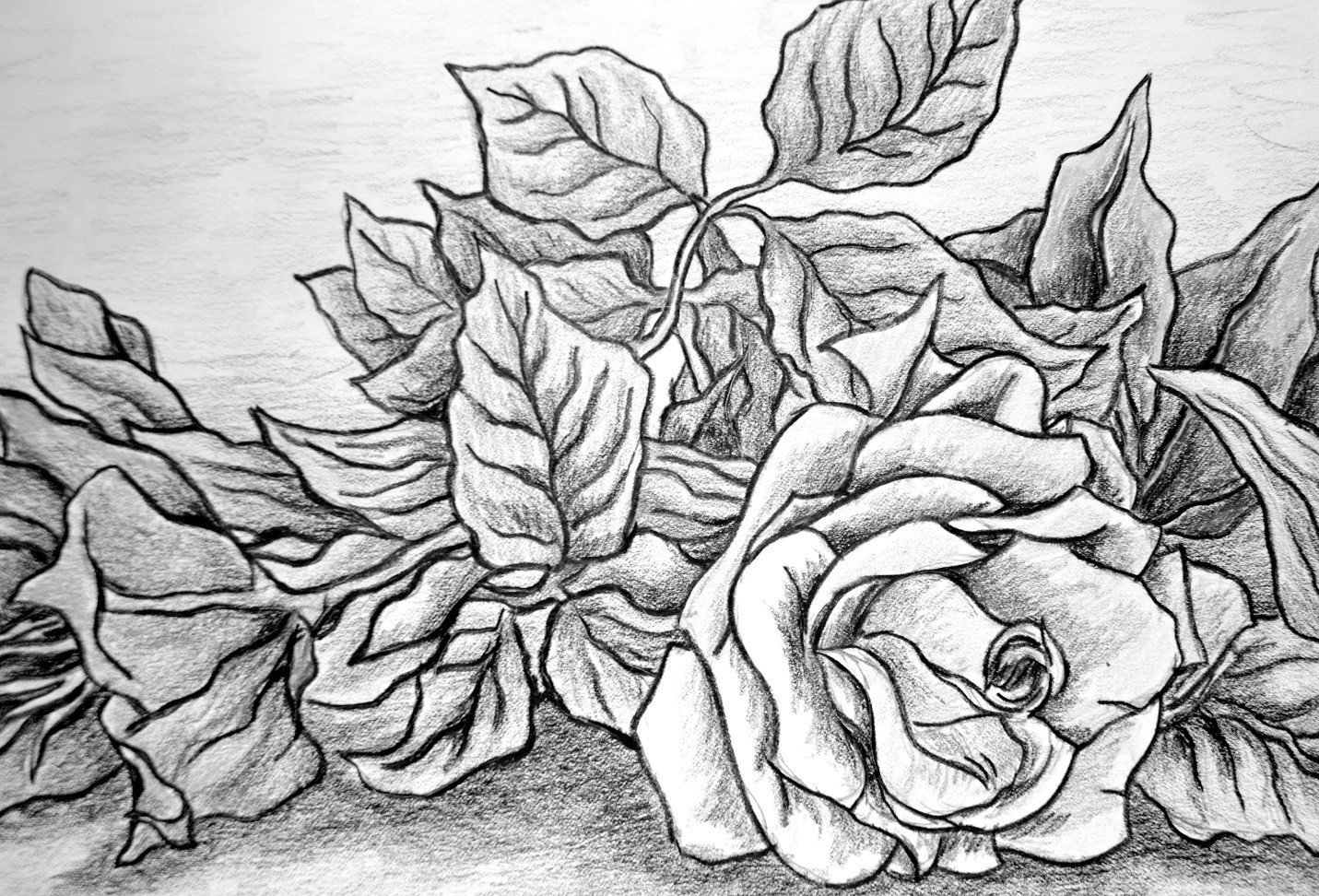 Roses Drawing